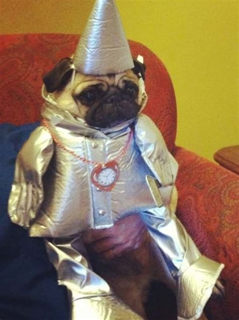 costume for pugs awesome costumes for pugs