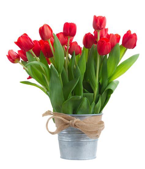 fiori tulipani bouquet di tulipani fiorionline it
