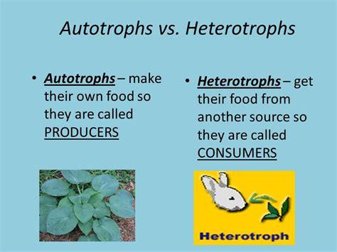 autotrophs vs heterotrophs worksheet differentiate autotrophs from heterotrophs