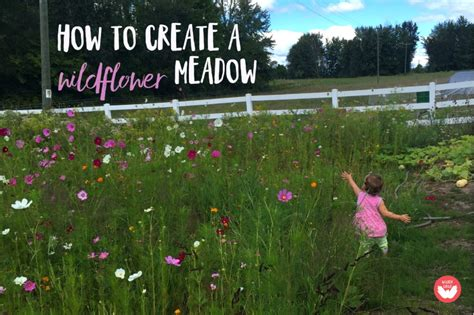 how to create an epic wildflower meadow the kids will love wilder child