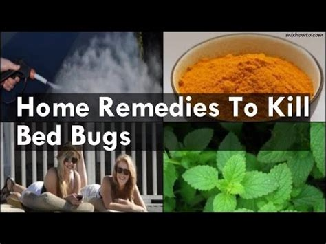 home remedies  kill bed bugs youtube