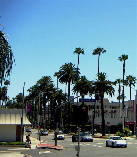 tree los angeles california los angeles palm trees nalini singh nyt