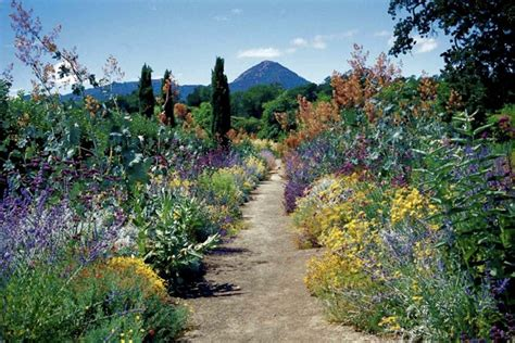 California Plants For The Garden by Connecting With Kate Frey Master Gardener Bay Nature