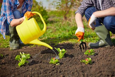 farmers taking care of plants stock photo 169 pressmaster