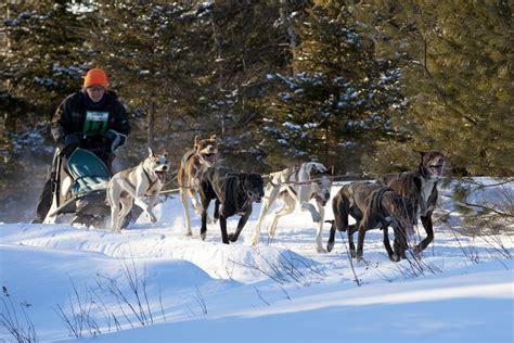news kearney dog sled races