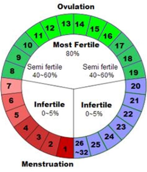 Menstrual Cycle And Ovulation Calendar 1000 Ideas About Fertility Chart On Ovulation