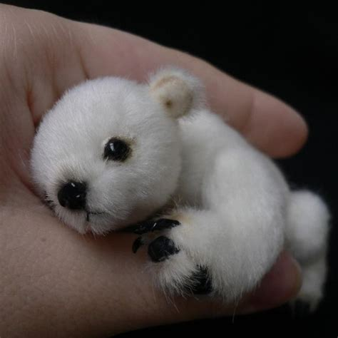 most adorable animals is this the most adorable animal you have ever seen omg