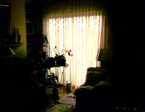 good houseplants for dark rooms plants in dark living room flickr photo sharing