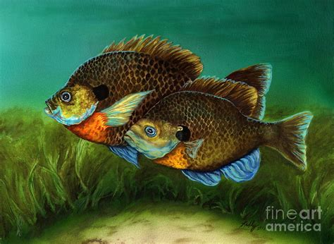 Metal Fish Wall Decor Pretty Little Panfish Painting By Kathleen Kelly Thompson