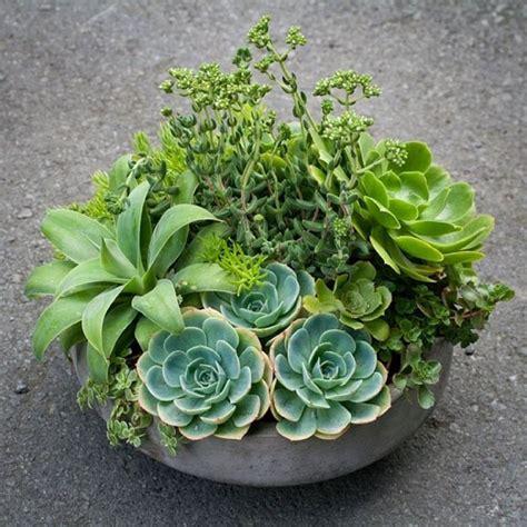 piante grasse da interno piante grasse da appartamento piante grasse come