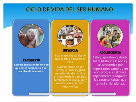 imageens del cilco de vida dels er humano para colorear ciclo de vida del ser humano