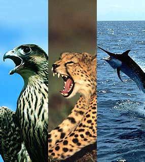 animais incríveis: o animal mais veloz do mundo