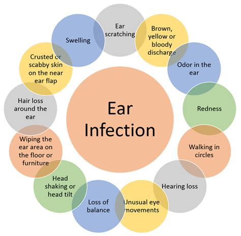 how do dogs get ear infections ear hair breeds picture