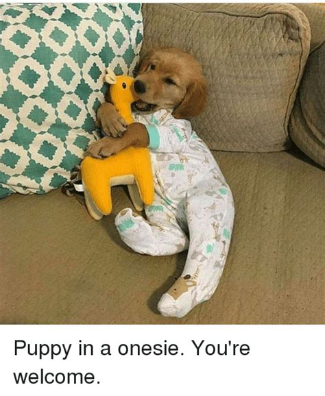 Your Welcome Meme - or puppy in a onesie you re welcome meme on me me
