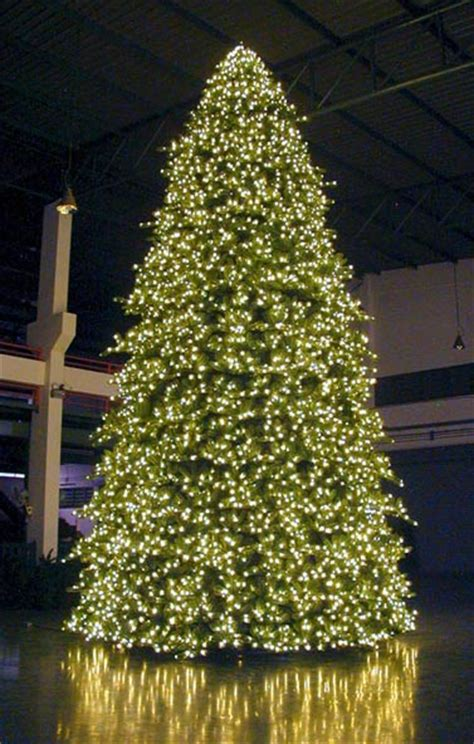 image gallery huge christmas trees