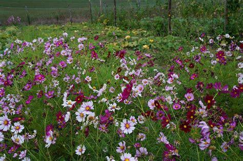 giardino biodinamico l orto giardino biodinamico tra bellezza musica e arte