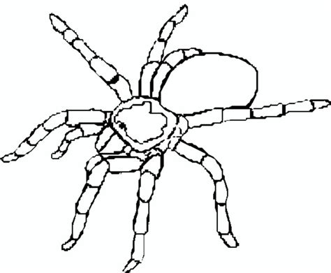 tarantula coloring page pets children s ministry