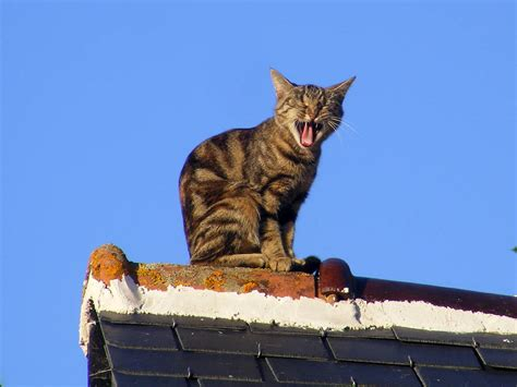 We Are The Cat On Tour by Days On The Claise Cat On A Roof