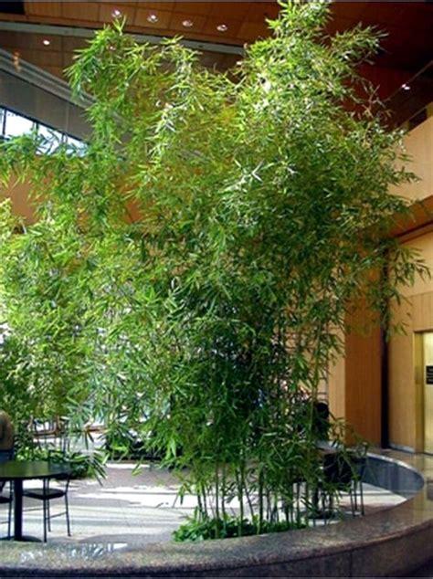 Bamboo Garden Design Ideas Yes Bamboo Garden Do At Home Important Garden Design Ideas Interior Design Ideas Ofdesign