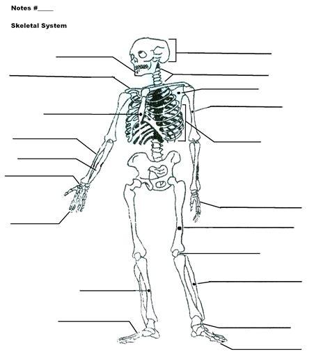 diagram muscular system diagram worksheet