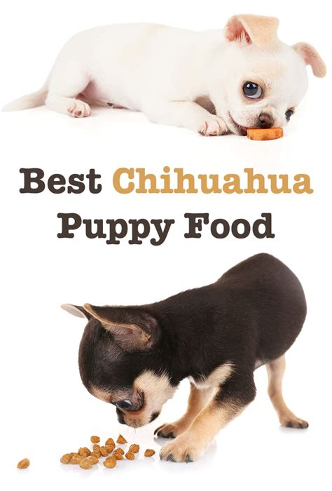 chihuahua puppy food best food for chihuahua puppy tips and reviews