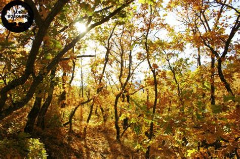 libro los bosques ibericos practicos 14 best images about robledal y bosque mixto de frondosas on natural blog and tes