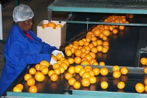 fruit pack houses fruit farms citrus trees gogo fruit
