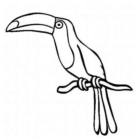 coloring pages of birds in the rainforest rainforest animal coloring pages az coloring pages