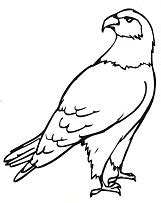 eagle coloring pages preschool free eagle coloring pages ideas for preschool preschool