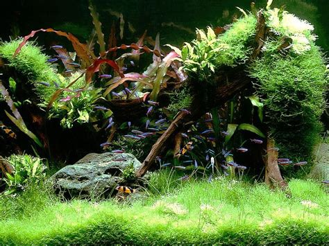 aquascape design australia 8371 best things i like images on pinterest fish