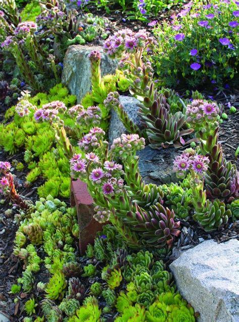 top   plants   rock garden top inspired