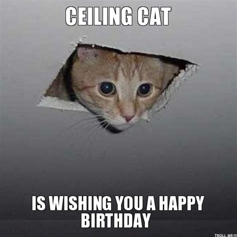 Birthday Cat Meme - memes vault funny happy birthday meme with cats birthday