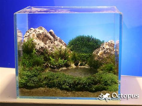 Aquascape Plants List by Best 25 Mini Aquarium Ideas On Diy