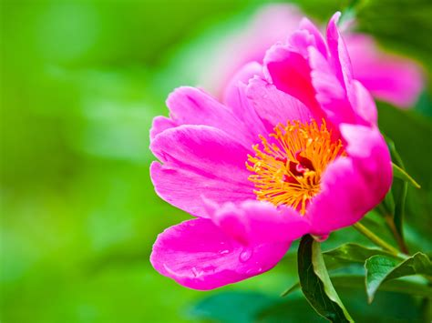 green wallpaper with pink flowers pink flowers picture small flower in bloom put against