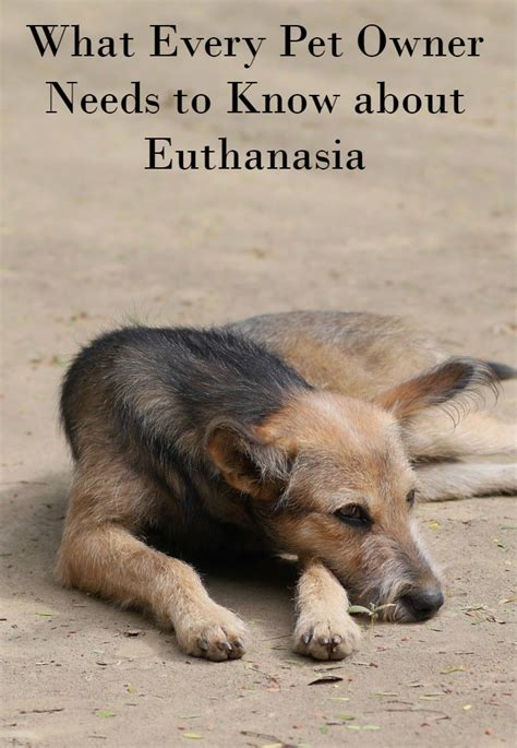 euthanasia for dogs what every pet owner needs to about euthanasia