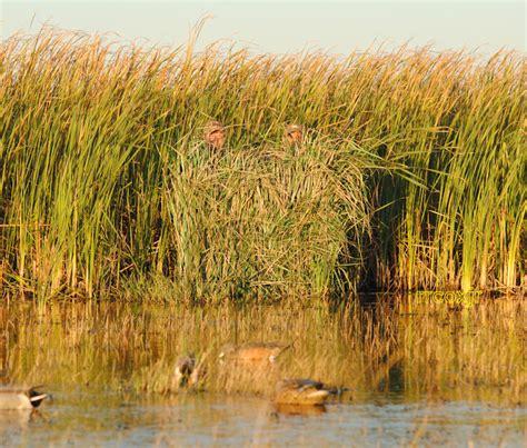 Duck Blind Grass Mats by Grass Mat Wallpaper Wallpapersafari