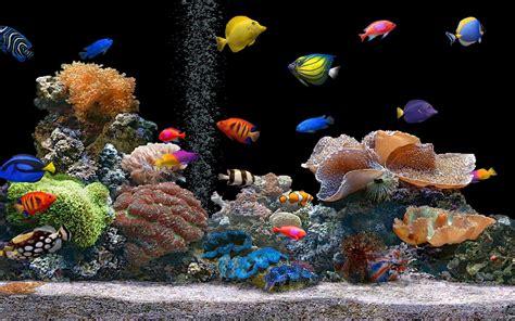 Desk Top Aquarium 1680x1050 aquarium desktop pc and mac wallpaper