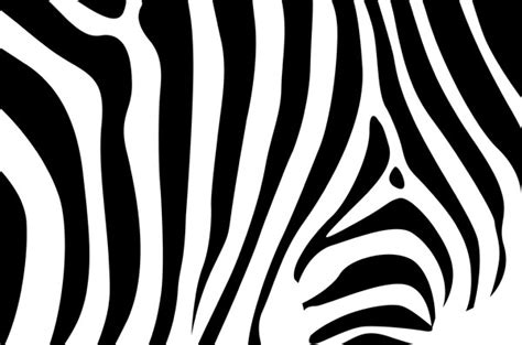 free zebra pattern background zebra background free vector in encapsulated postscript