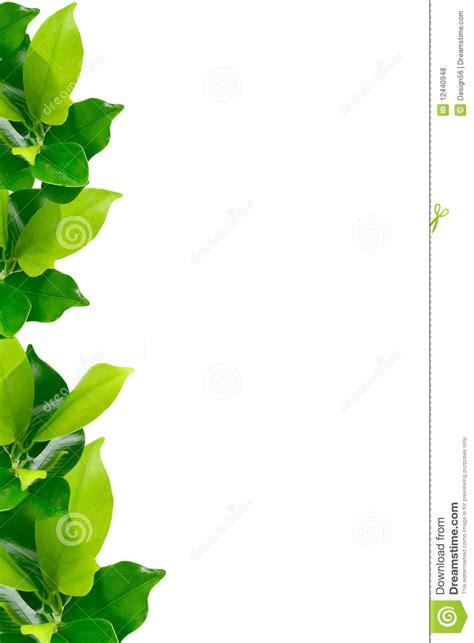 border plant clipart clipground