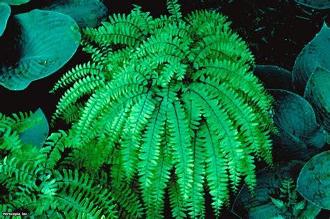 low light outdoor plants indoor plants low light hgtv