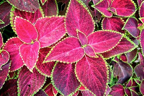 colorful shade plants flowering shade plants colorful plants for shade curb