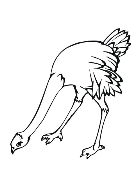 free printable ostrich coloring pages for