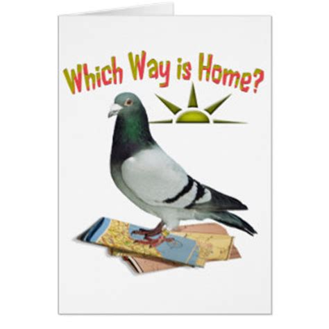 Pigeon Birthday Card pigeon greeting cards zazzle co uk