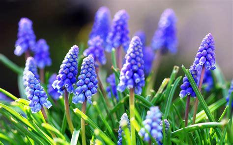 fonds d 233 cran fleurs bleues