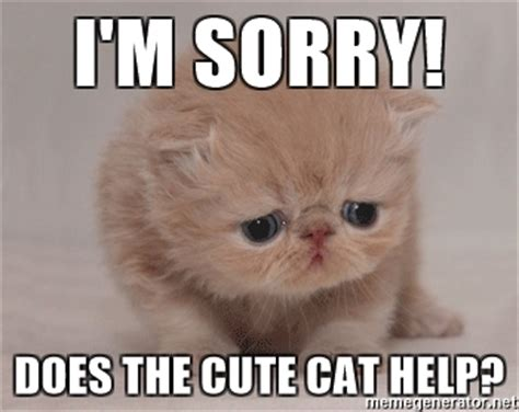 Cute Cat Meme Generator - i m sorry does the cute cat help super sad cat meme