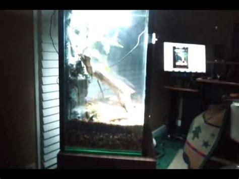 gallon fish tank  vertical terrarium conversion youtube