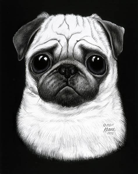 pug black and white drawing black and white pug keane gallery