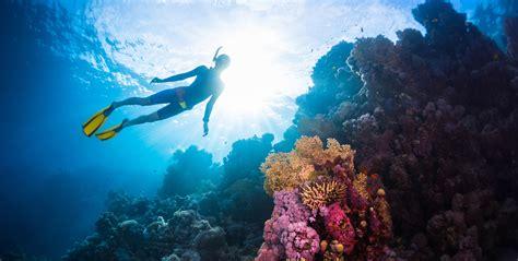dive skins scuba diving snorkeling skin diving freediving what s