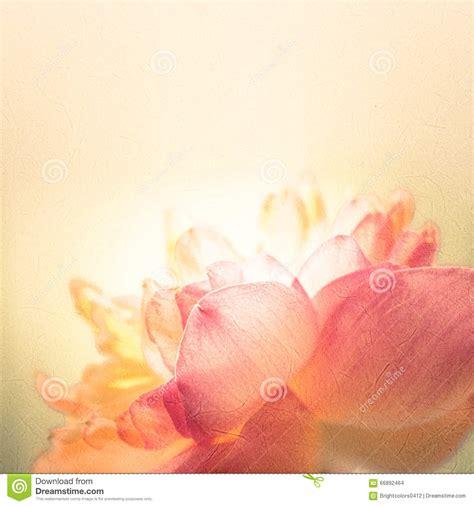 lotus os os l 243 tus doces da cor no estilo macio da cor e do borr 227 o