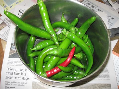 Garden Salsa Pepper by The Transplantable October 2010
